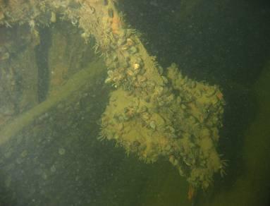 Tältä näyttää rauta-ankkurin lapa vietettyään 300 vuotta Suomenlahdessa.